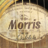 MORRIS W-20 Акустическая гитара